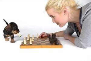 schaken-lid-wordenjpg